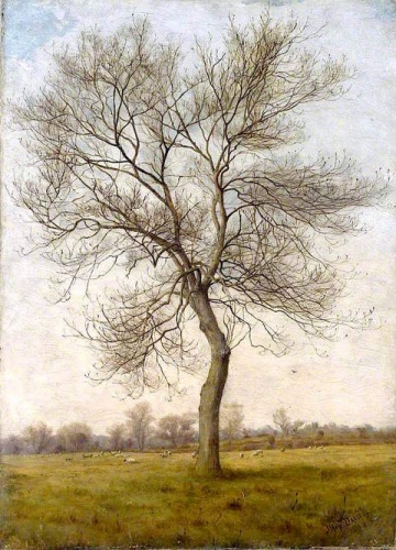 Study of an Ash Tree in Winter.jpg