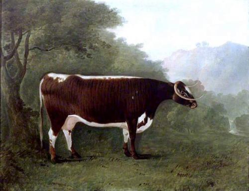 Garricks Sister: A Cow.jpg