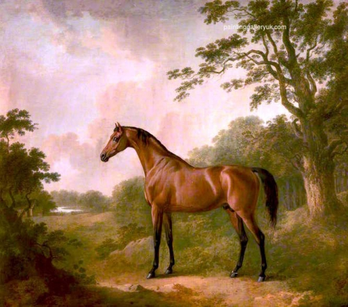 A Bay Hunter Named Sir Oliver.jpg