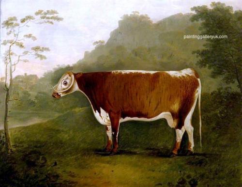Brindled Beauty: A Cow.jpg