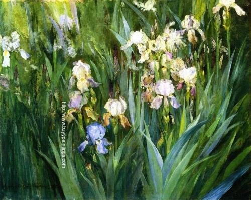Iris at Dawn.jpg