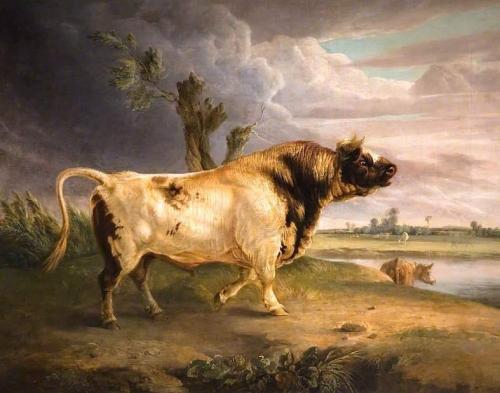 A Prize Bull.jpg