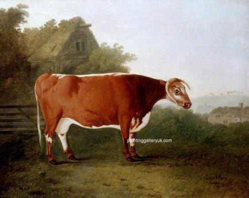 Broken-Horned Beauty: A Cow.jpg