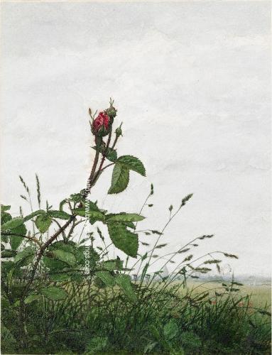 Rose and Grasses.jpg