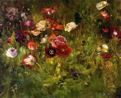 A Bed of Poppies.jpg