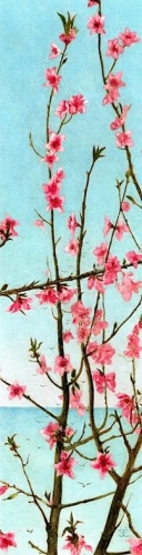 Blossoming Pink Branches.jpg