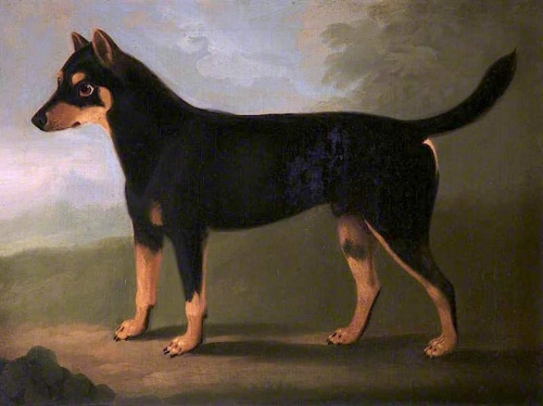 A Dog with Dark Tan and Pale Tan Markings with a Mask-Like Marking on its Face in a Landscape.jpg