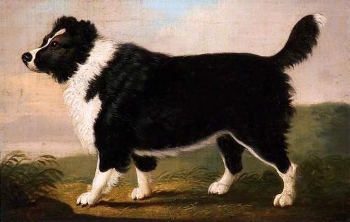 Newfoundland Dog.jpg