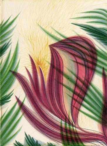Flower of William Harman Butler.jpg