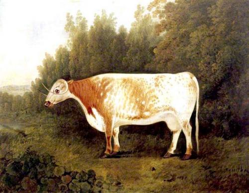 Spotted Nancy: A Cow.jpg